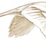 bird shape flt 1