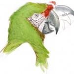 parrot kenisis