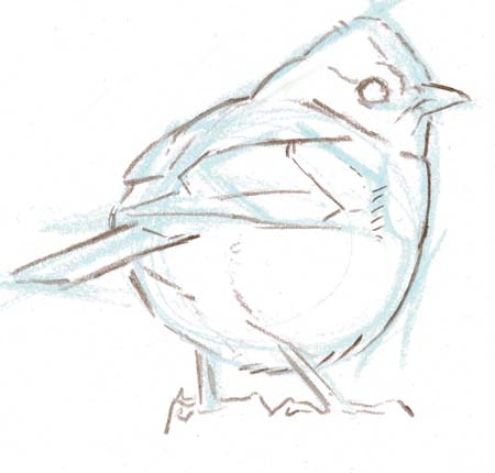 Drawing Birds: side, front, back and 3/4 views (video workshop)