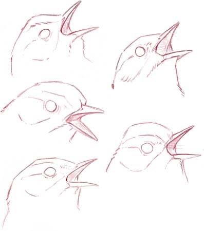 Sketching Bird Songs (video)