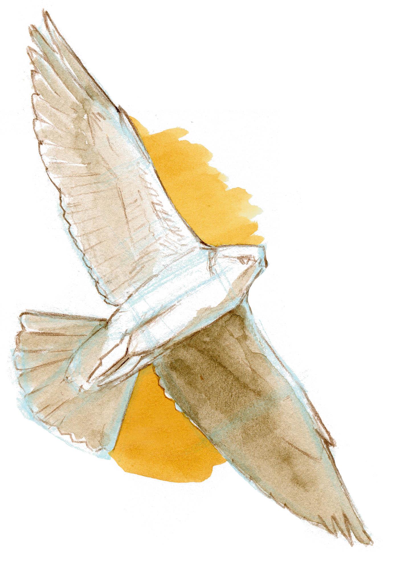 negative shapes on bird in flight john muir laws