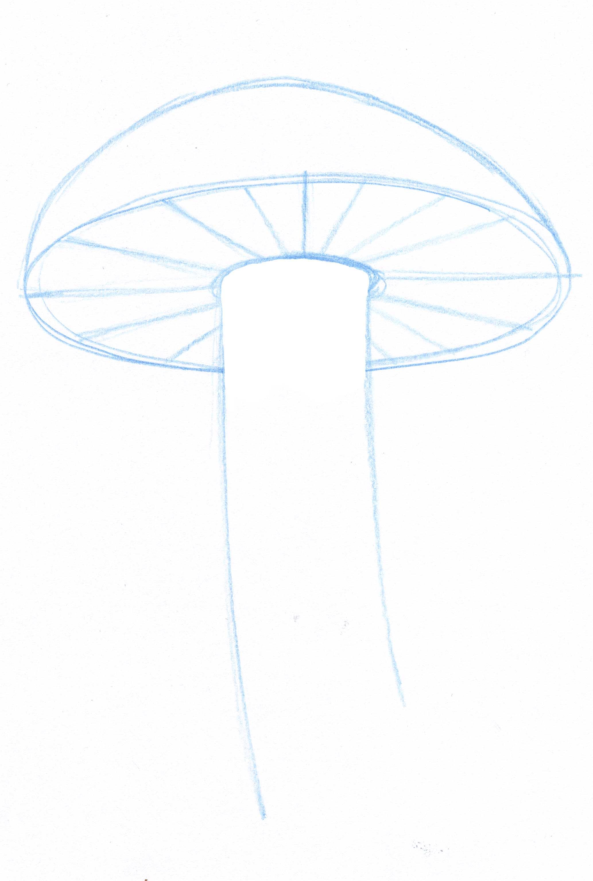 Drawing Lines Visual Basic : Erase inside the stipe john muir laws