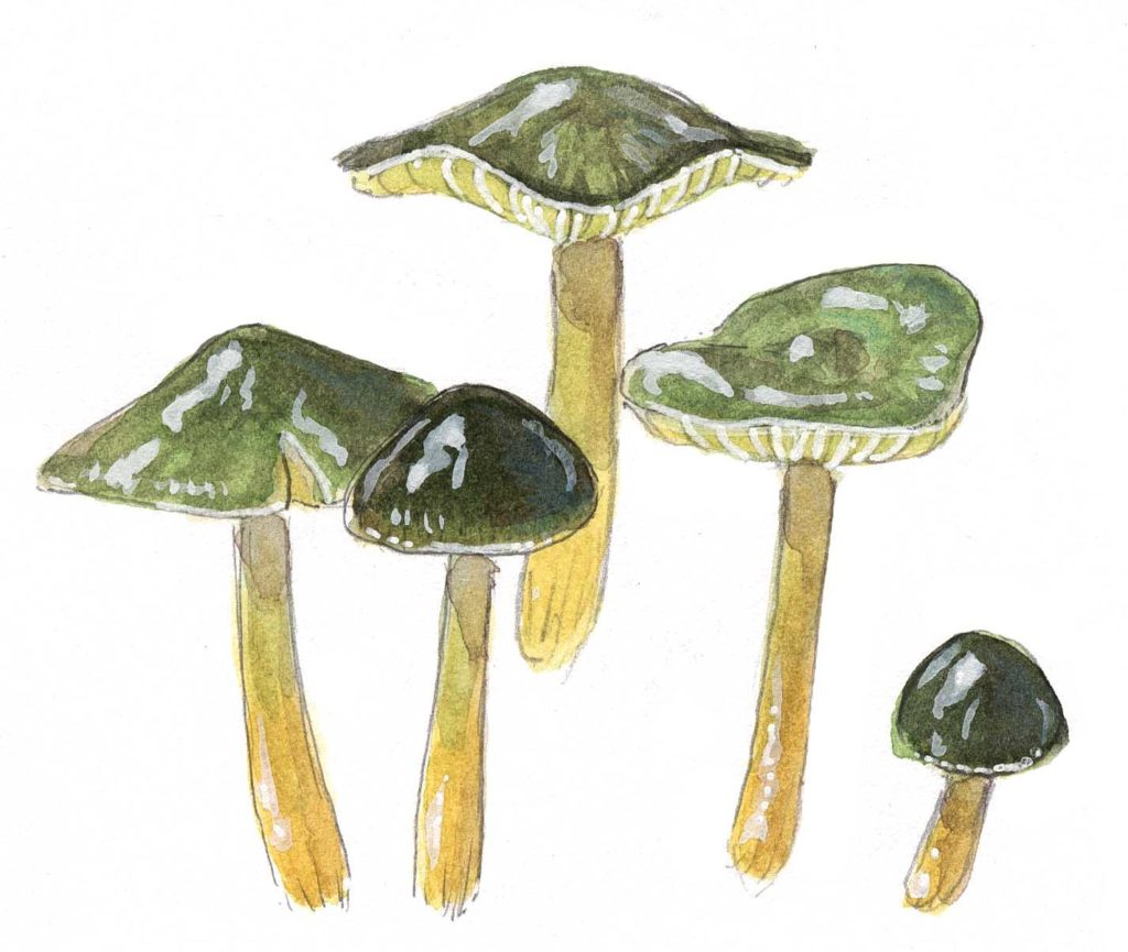 How to Draw Mushrooms (video workshop)