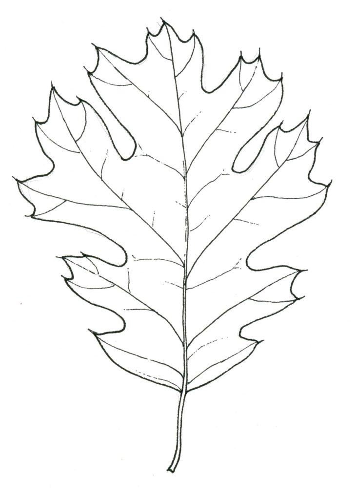 black oak leaf stippleboard 5