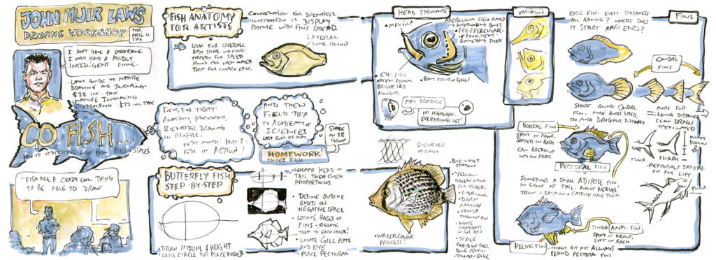 How to draw fish I (video workshop)