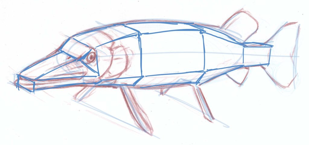 Foreshortened Pike- step-by-step