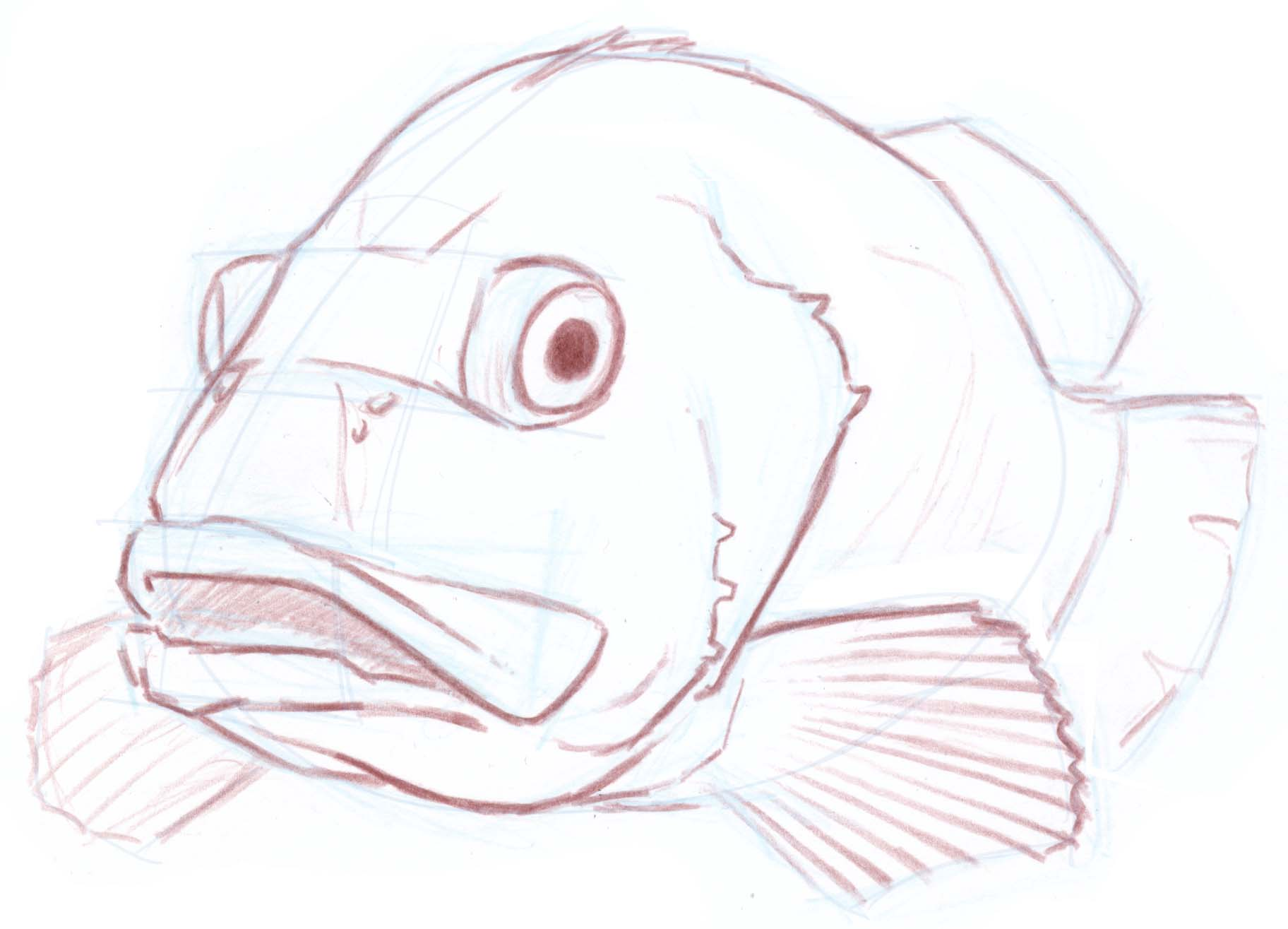 how to draw a foreshortened fish sea bass john muir laws