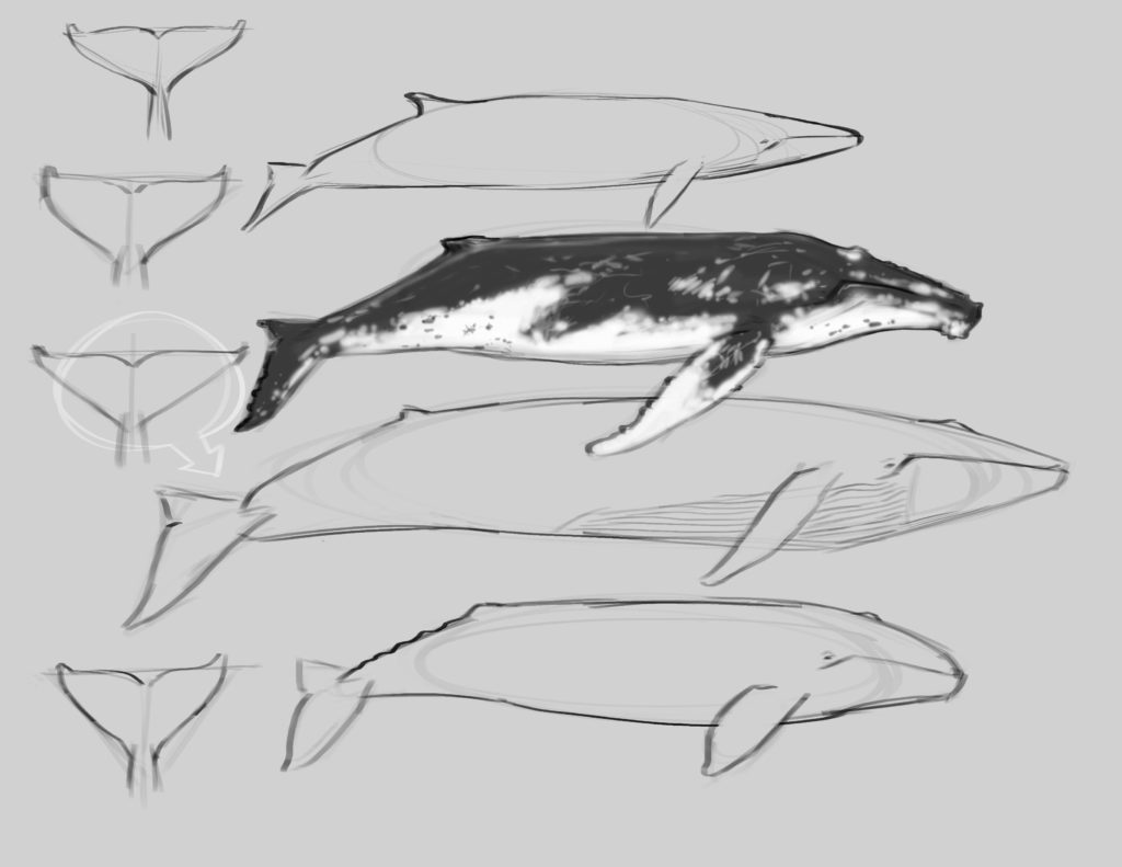 Whale Illustration Basics