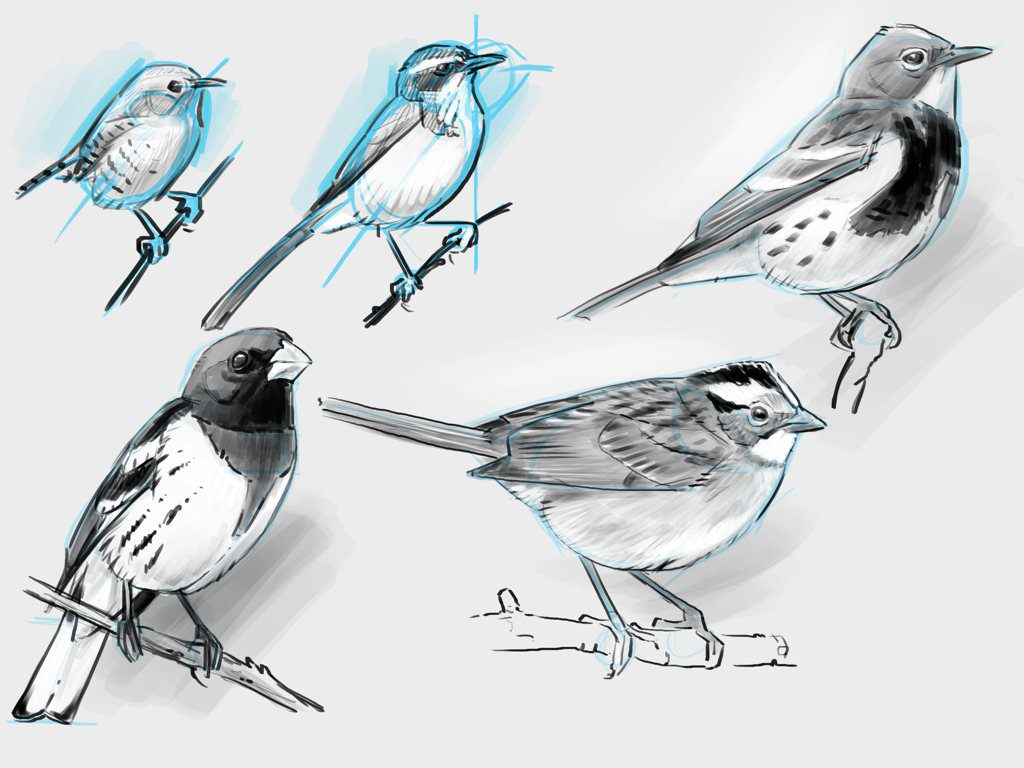 The New Bird Drawing System (video)