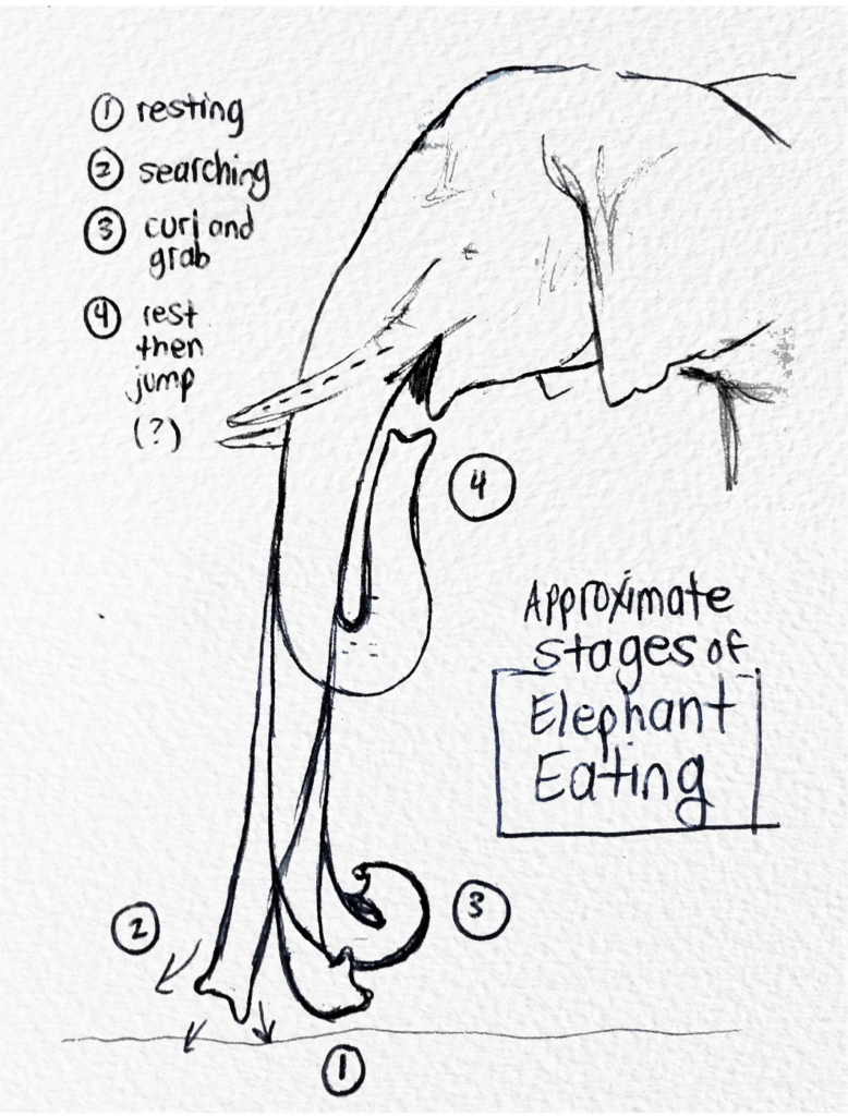Doodling Diagrams with Amy Schleser (Video)