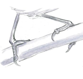 How to Draw Bird Feet